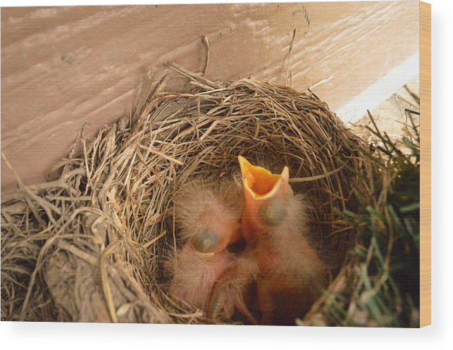 Baby Wood Print featuring the photograph Please Feed Me by Dacia Doroff