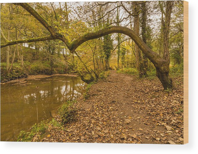 Northumberland Wood Print featuring the photograph Plessey Woods Riverside Footpath by David Head