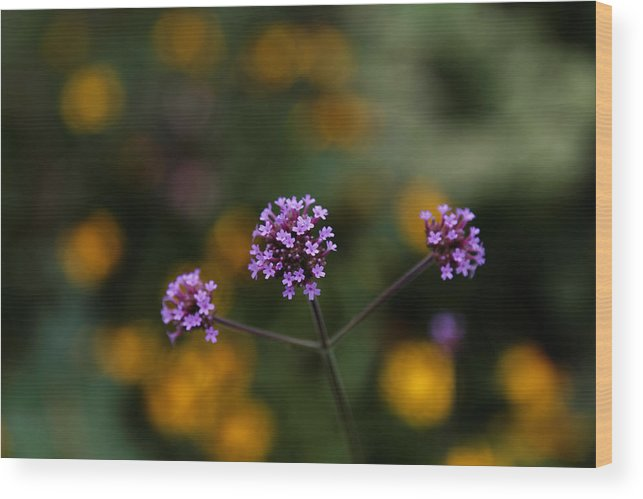 Purple Flowers Wood Print featuring the photograph Pom Pom Plant by Scott Hill