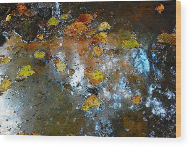 Flowers Wood Print featuring the photograph Pond Scum by Jim Southwell