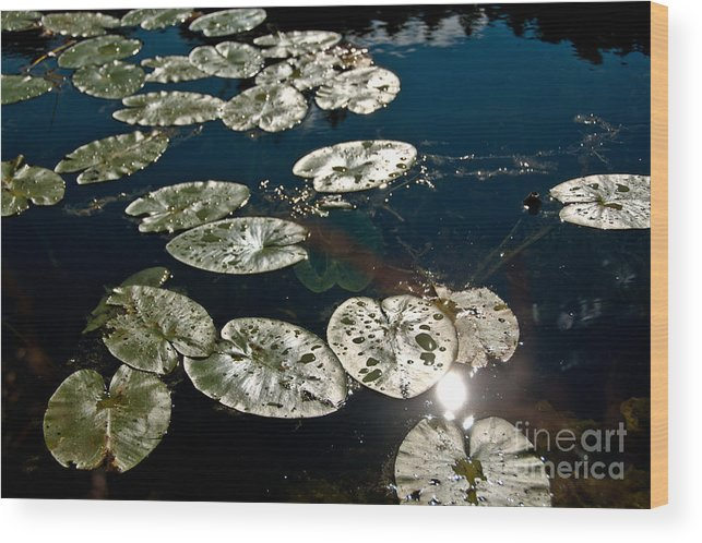 Lily Pads Wood Print featuring the photograph Pond Sunset by Cheryl Baxter