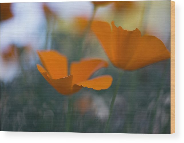 Flowers Wood Print featuring the photograph Poppies by Mike Gifford