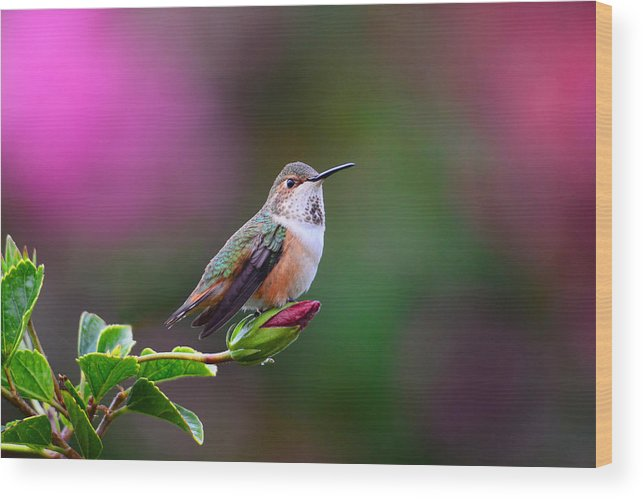 Hummer Wood Print featuring the photograph Portrait Of A Hummer 2 by Lynn Bauer