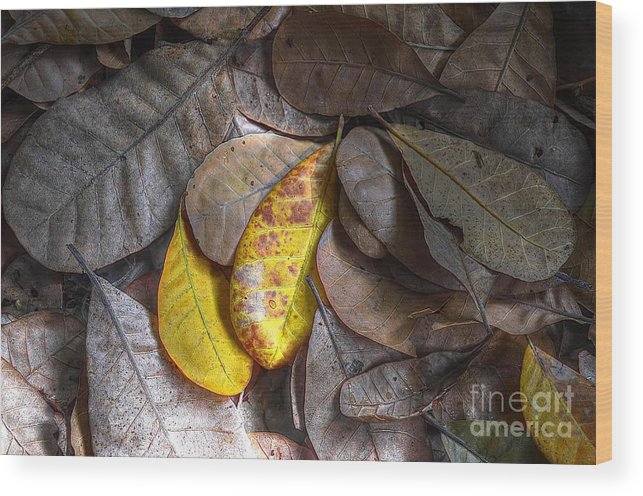 Michelle Meenawong Wood Print featuring the photograph Pot-pourri by Michelle Meenawong
