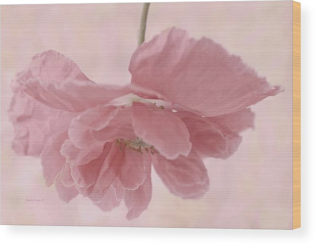 Poppy Wood Print featuring the photograph Pretty Pink Poppy Macro by Sandra Foster