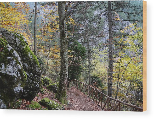 Forest Wood Print featuring the photograph Prionia by Andonis Katanos