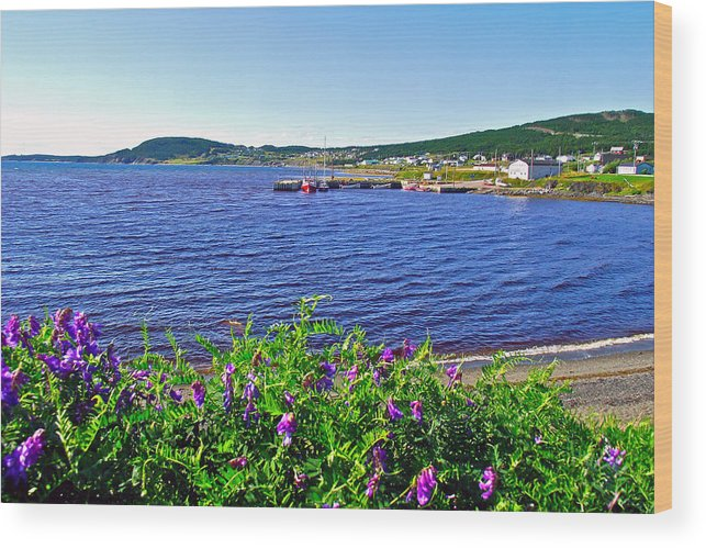 Purple Vetch Overlooking Rocky Harbour In Gros Morne Np Wood Print featuring the photograph Purple Vetch Overlooking Rocky Harbour-nl by Ruth Hager