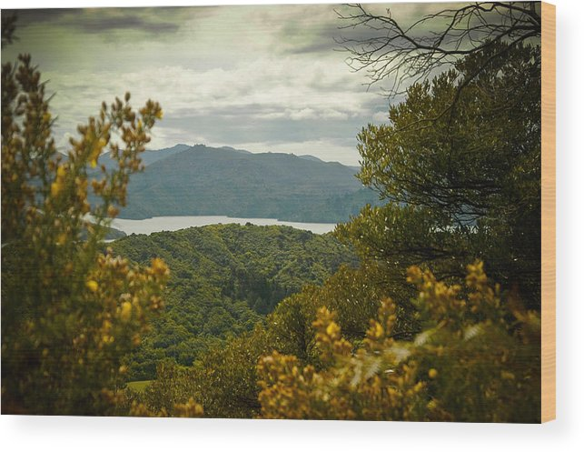 Canvas Wood Print featuring the photograph Queen Charlotte Sound by Mark Llewellyn