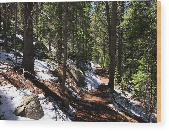Lawn Lake Trail Wood Print featuring the photograph Quiet Serenity by Cynthia Cox Cottam