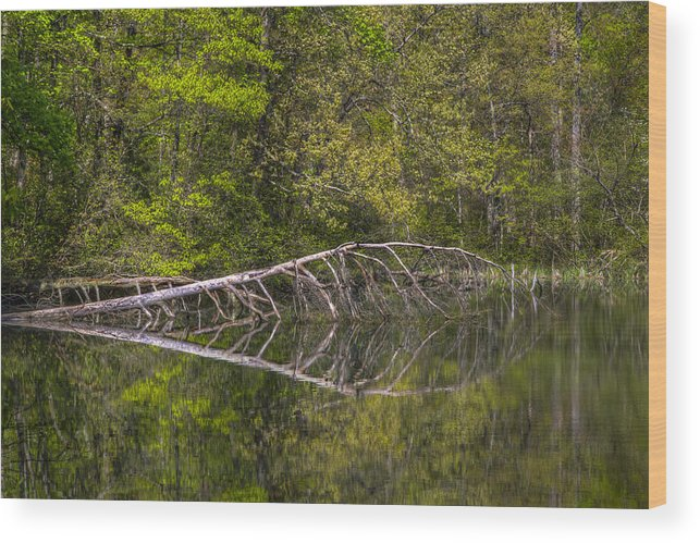 Appalachia Wood Print featuring the photograph Quiet Waters by Debra and Dave Vanderlaan