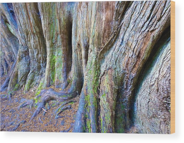 Tree Wood Print featuring the photograph Rainbow Tree by Charlie Brock