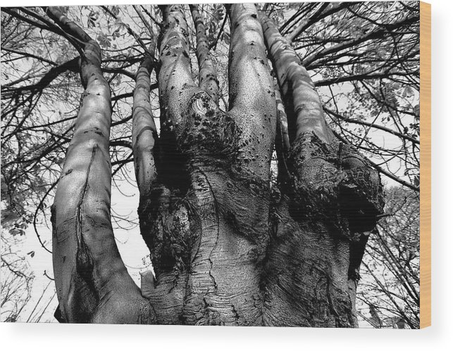 Strong Wood Print featuring the photograph Quiet Strength by Dwight Pinkley
