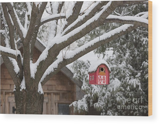 Birdhouse Wood Print featuring the photograph Red Barn Birdhouse On Tree In Winter by Elena Elisseeva