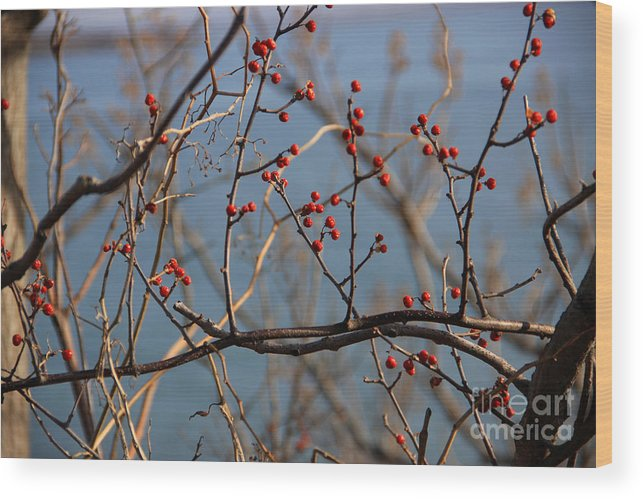 Winter Wood Print featuring the photograph Red Berries by Michael Mooney