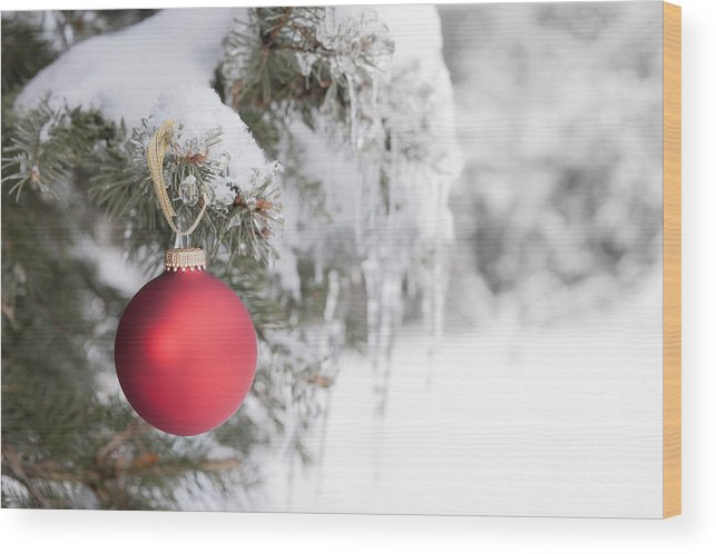 Christmas Wood Print featuring the photograph Red Christmas Ornament On Icy Tree by Elena Elisseeva