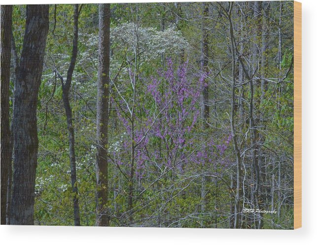 Landscape Wood Print featuring the photograph Red River Gorge Spring by Nicholas Hall