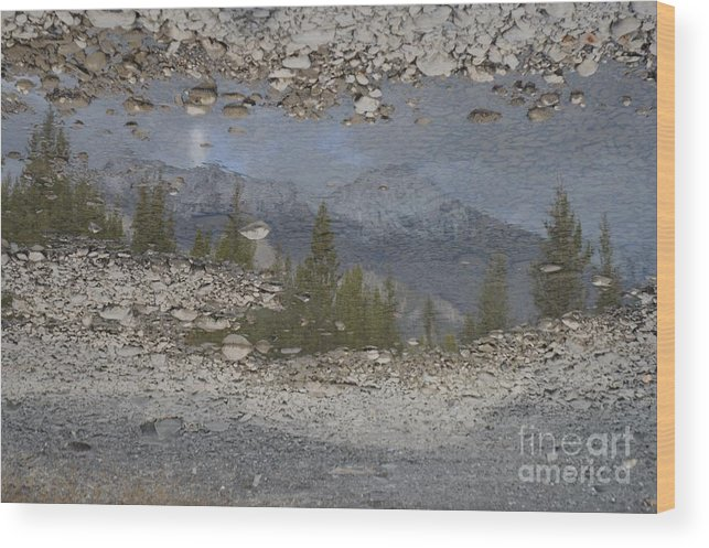 Reflection Wood Print featuring the photograph Reflections On A Mountain Stream by Brian Boyle