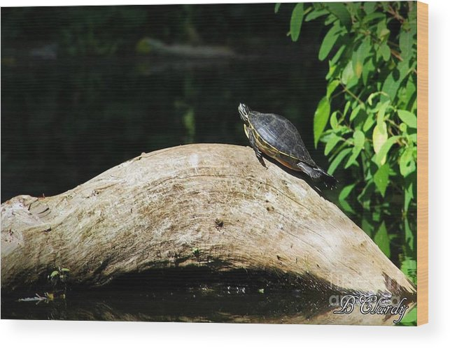 Nature Wood Print featuring the photograph Relaxin' by Bridget Clardy