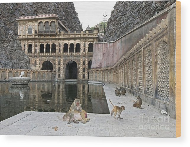 Rhesus Monkey Wood Print featuring the photograph Rhesus Monkeys At An Indian Temple by Tony Camacho