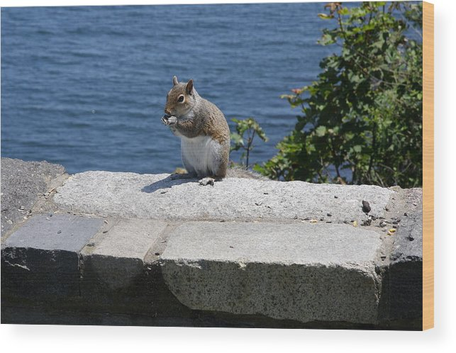 Squirrel Wood Print featuring the photograph Rhode Island Squirrel by Christiane Schulze Art And Photography