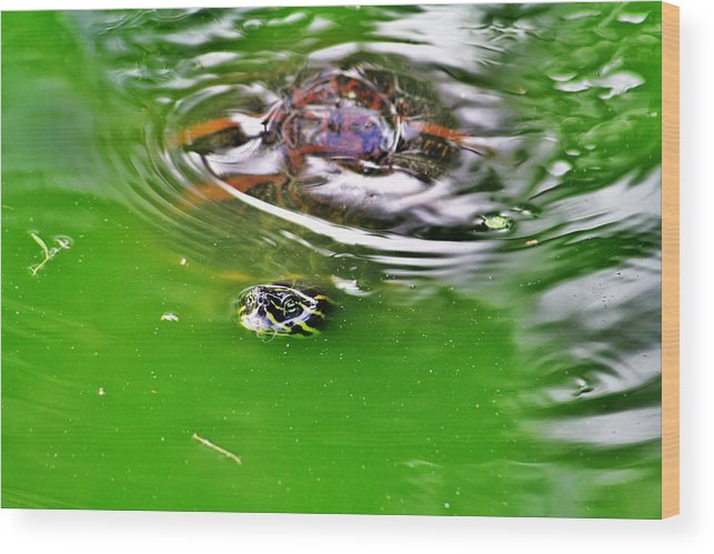Everglades Wood Print featuring the photograph Rippled Green by Chuck Hicks