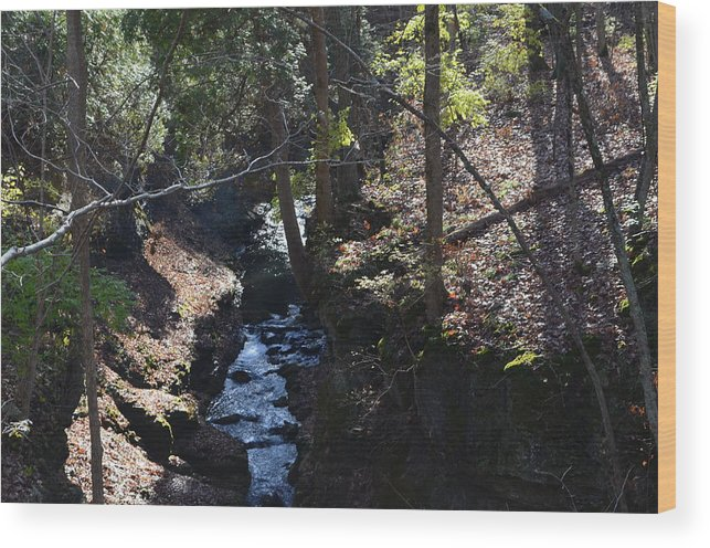 Trees Wood Print featuring the photograph River Beneath The Trees by Arya Acier