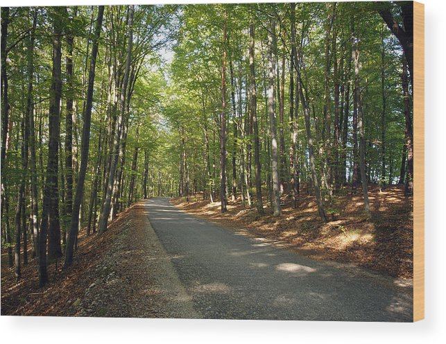 Asphalt Wood Print featuring the photograph Road In Forest by Ioan Panaite