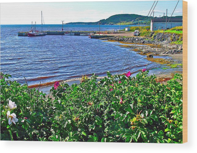 Rocky Harbour Roses In Gros Morne Np Wood Print featuring the photograph Rocky Harbour Roses-nl by Ruth Hager