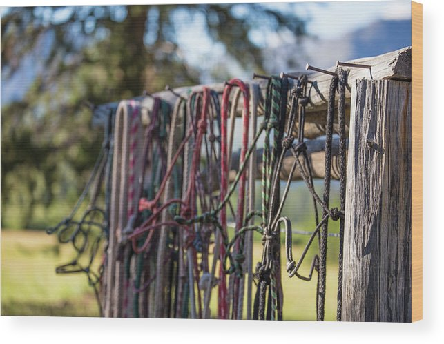 Rope Wood Print featuring the photograph Rope Halters For Horses Lined by Jess McGlothlin Media