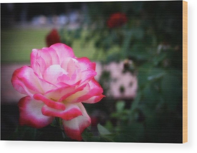 Flower Wood Print featuring the photograph Rose by Luisa Garcia