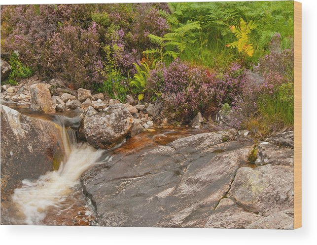 Heather Wood Print featuring the photograph Running From Heather by Jim Southwell
