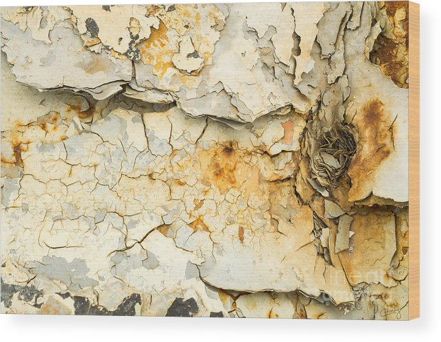 Rust Wood Print featuring the photograph Rust And Peeling Paint by Imagery by Charly