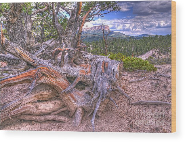 Roots Wood Print featuring the photograph Rustic Roots by Earl Nelson