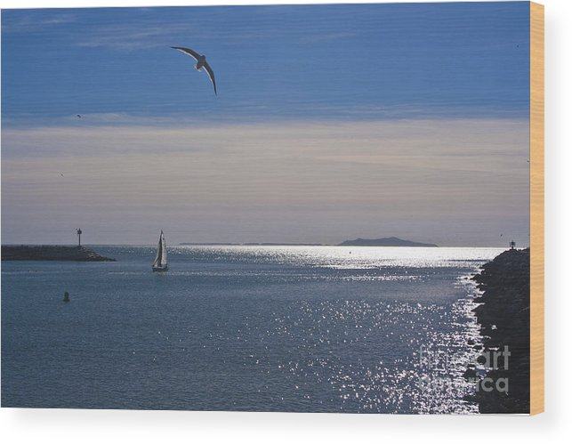 Anacapa Wood Print featuring the photograph Sailing On Christmas Ventura Harbor by Ian Donley