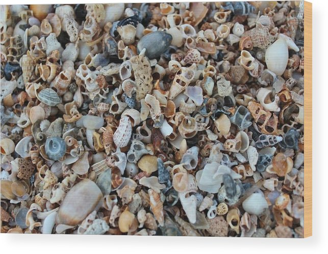 Shells Wood Print featuring the photograph Sallie's Sea Shells by John Griswold