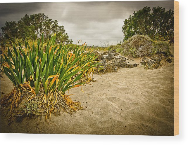 Greece Wood Print featuring the photograph Sands And Grass Of Elafonisi by Oleg Koryagin