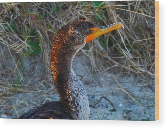 Sea Wood Print featuring the photograph Sea Duck by Holly Dwyer