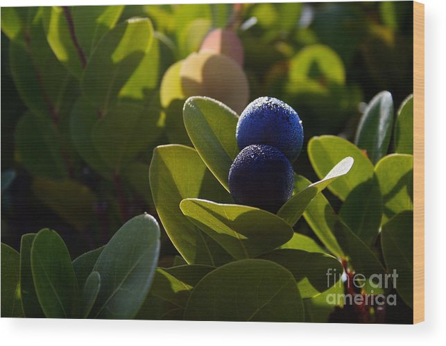 Exuma Wood Print featuring the photograph Sea Grapes by Cheryl Hurtak