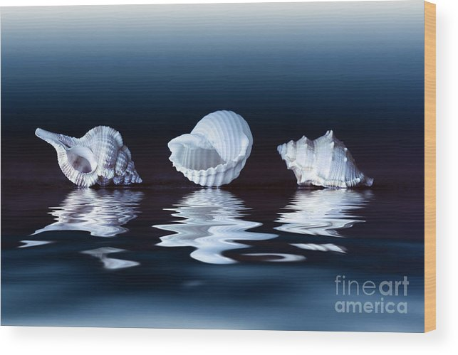 Shell Wood Print featuring the photograph Sea Shells On Water by Konstantin Sutyagin