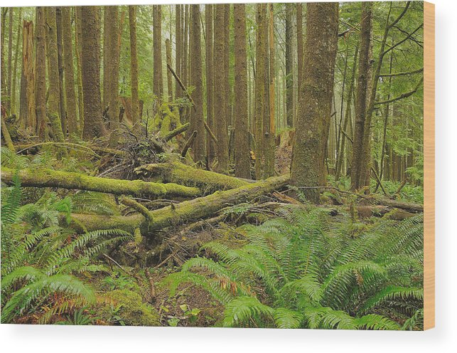 Forest Wood Print featuring the photograph Seeing Forest Through The Trees by Jim Southwell