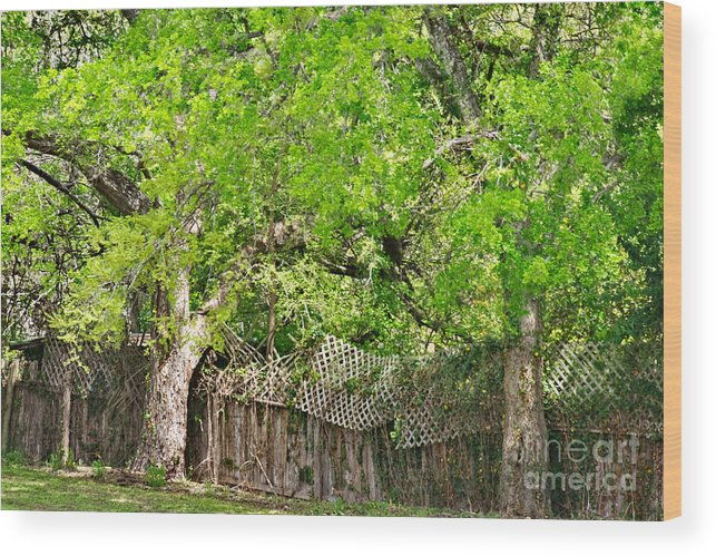 Senescence Wood Print featuring the photograph Senescence by Gary Richards