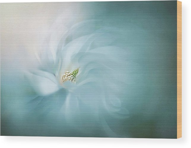 Macro Wood Print featuring the photograph Serene by Jacky Parker
