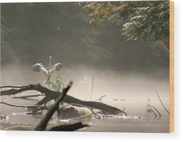 Birds Wood Print featuring the photograph Shake It Off by Wayne Toutaint