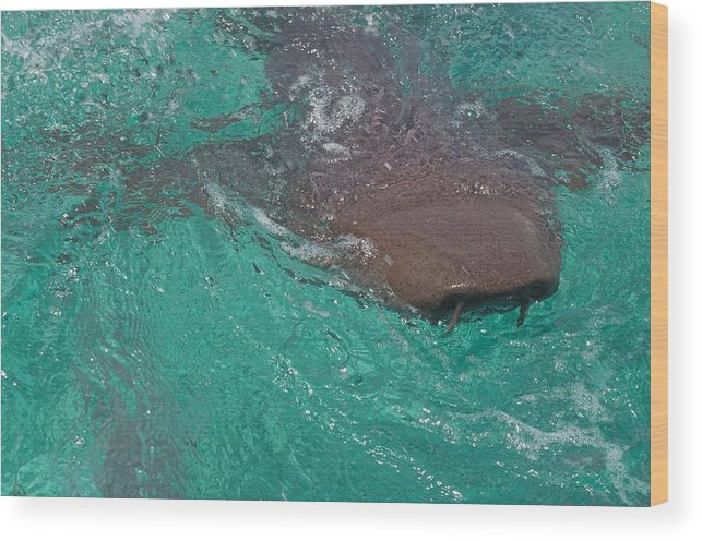 Shark Photograph Wood Print featuring the photograph Shark Sees Me by Kristina Deane