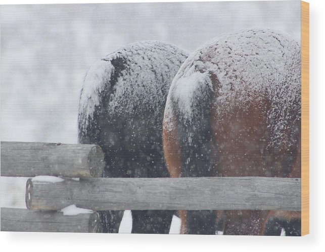 Snow Wood Print featuring the photograph Snow Butts by Kim Baker