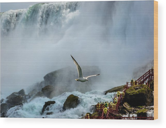 Niagara Falls Wood Print featuring the photograph Soaring In The Mist by Pat Scanlon