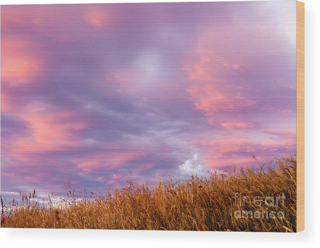 Atmosphere Wood Print featuring the photograph Soft Diffused Colourful Sunset Over Dry Grassland by Stephan Pietzko