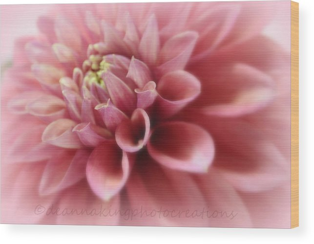 Pink Dalia's Wood Print featuring the photograph Soft Pink Dalia by Deanna King