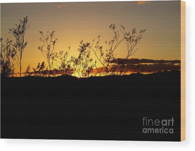 American Wood Print featuring the photograph Sonoran Desert Sunset by Kerri Mortenson