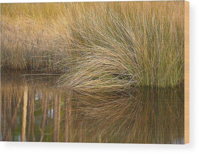 Florida Wood Print featuring the photograph Spartina Grass by Bill Chambers
